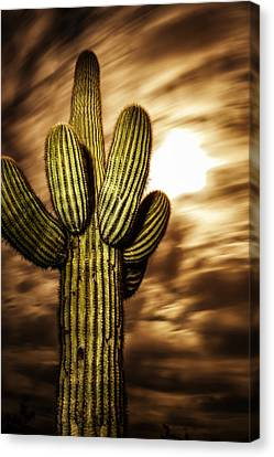 Canvas Print featuring the photograph Full Moon Saguaro by Anthony Citro