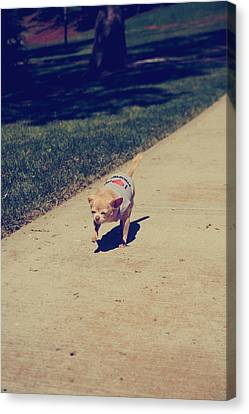 Full Speed Ahead Canvas Print