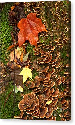 Canvas Print featuring the photograph Fungi by Jim McCain