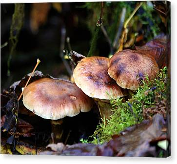 Fungus Among Us II Canvas Print by Jeanette C Landstrom