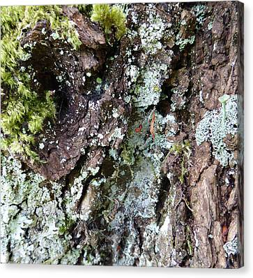 Canvas Print featuring the photograph Fungus Bark by Laurie Tsemak