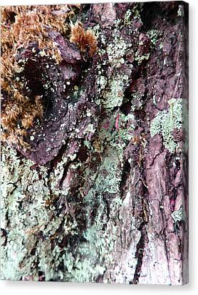 Canvas Print featuring the photograph Fungus Bark Purple by Laurie Tsemak