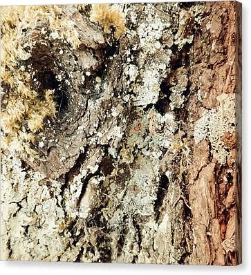 Canvas Print featuring the photograph Fungus Bark Vintage by Laurie Tsemak