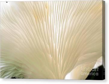 Fungus Canvas Print by Steven Ralser