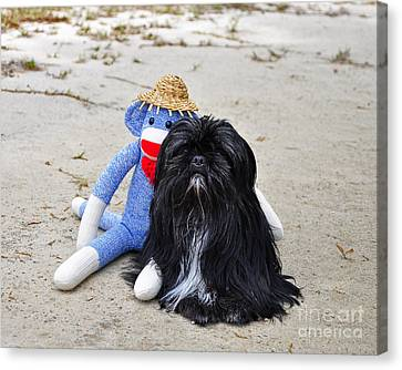 Funky Monkey And Sweet Shih Tzu Canvas Print by Al Powell Photography USA