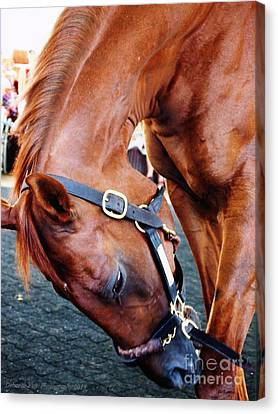 Funny Cide A Champion Canvas Print