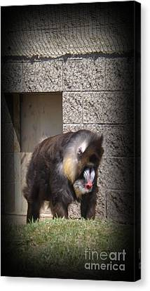 Funny Face Canvas Print by Sara  Raber