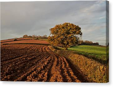 Furrows And Field Canvas Print by Pete Hemington