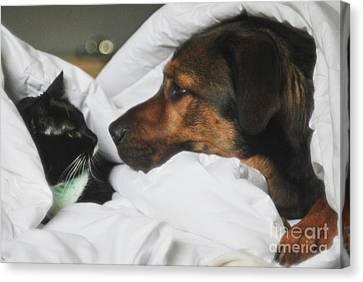 Furry Pillow Talk Canvas Print