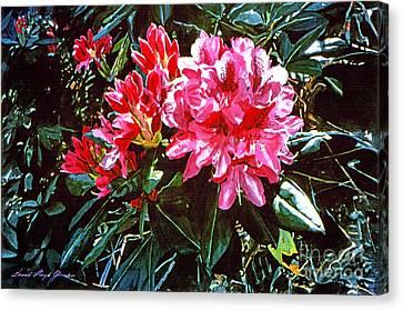 Fuschia Rhododendrons Canvas Print by David Lloyd Glover