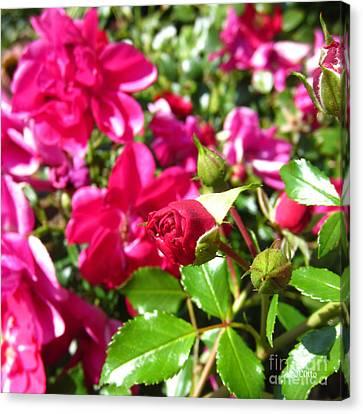 Fuschia Roses Canvas Print