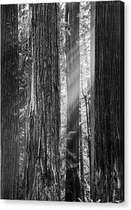 Future Giants Monochrome Canvas Print