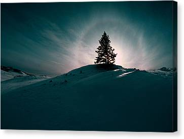 Fv4157, Will Datene Pine Tree On A Hill Canvas Print by Will Datene