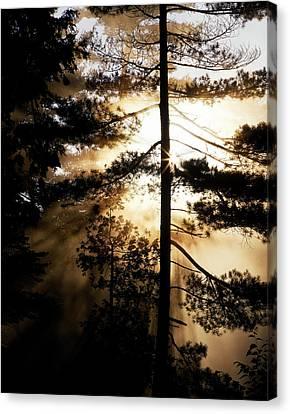 Fv5423, Perry Mastrovito Sunrise Though Canvas Print by Perry Mastrovito