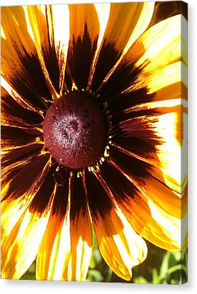 Canvas Print featuring the photograph Gaillardia by Gary Stamp