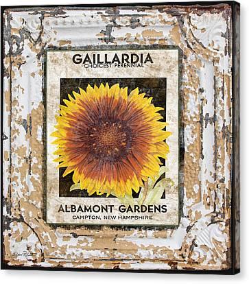 Gaillardia On Vintage Tin Canvas Print by Jean Plout