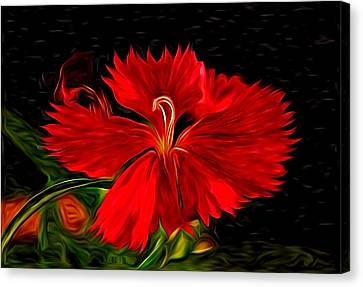 Galactic Dianthus Canvas Print by David Kehrli