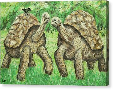 Galapagos Giant Tortoise Canvas Print by Ronald Haber