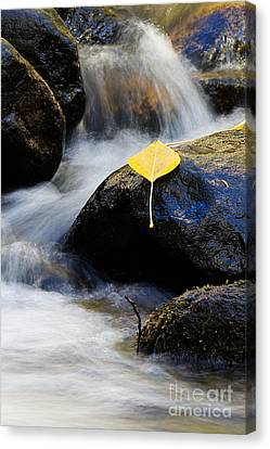 Canvas Print featuring the photograph Galena Creek Trail  by Vinnie Oakes