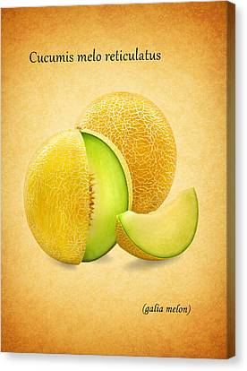 Galia Melon Canvas Print