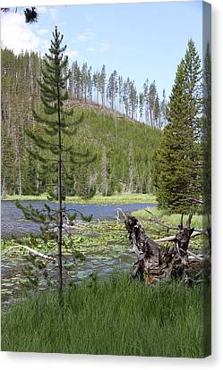 Gallatin River Yellowstone  Canvas Print by Christiane Schulze Art And Photography