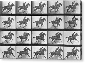 Galloping Horse Canvas Print by Eadweard Muybridge