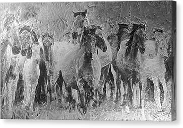 Galloping Horse Team Canvas Print by Odon Czintos