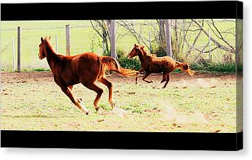 Galloping Horses Canvas Print by Arie Arik Chen