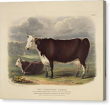Galloway Breed Canvas Print by British Library
