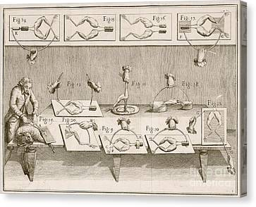 Galvani's Electricity Experiments, 1780s Canvas Print by British Library