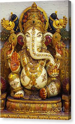 Ganesha  Canvas Print by Tim Gainey