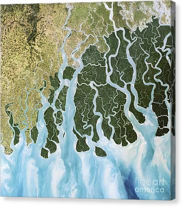 Ganges River Delta, India Canvas Print