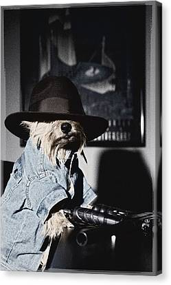 Gangster Dog Canvas Print by Susan Stone