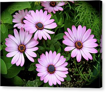 Garden Beauty Canvas Print by Ed  Riche