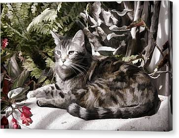 Garden Cat Canvas Print by Photographic Art by Russel Ray Photos