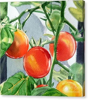 Tomato Canvas Print - Garden Cherry Tomatoes  by Irina Sztukowski