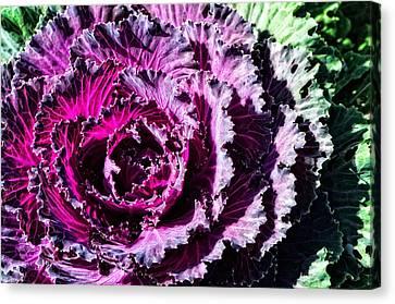 Garden Haze - Purple Kale Art By Sharon Cummings Canvas Print by Sharon Cummings