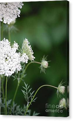 Garden Lace Group By Jammer Canvas Print