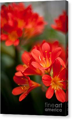 Garden Of Bliss Canvas Print by Mike Reid