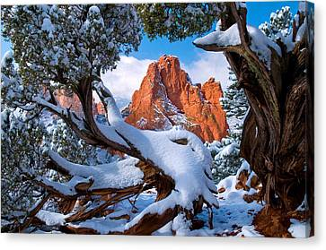 Garden Of The Gods Framed By Juniper Trees Canvas Print