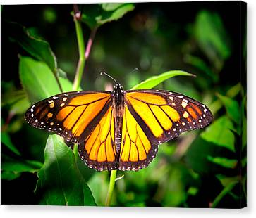 Garden Of The Monarch Canvas Print by Mark Andrew Thomas