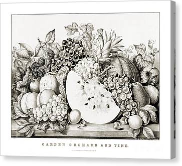 Garden Orchard And Vine - 1867 Canvas Print
