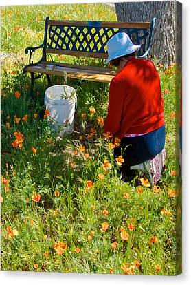 Garden Party In Park Sierra-ca Canvas Print by Ruth Hager