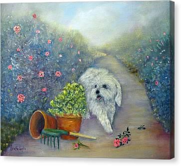 White Maltese Canvas Print - Garden Path by Loretta Luglio