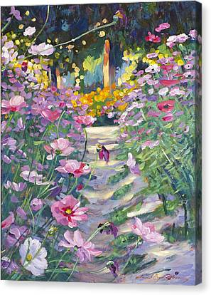 Flower Bed Canvas Print - Garden Path Of Cosmos by David Lloyd Glover
