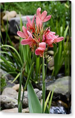 Garden Pond Water Canna Canvas Print by Penny Lisowski