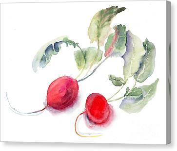 Garden Radish Canvas Print