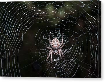 Canvas Print featuring the photograph Garden Spider by Matt Malloy