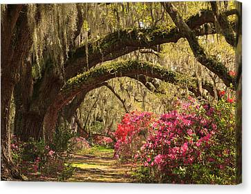 Canvas Print featuring the photograph Garden View by Patricia Schaefer