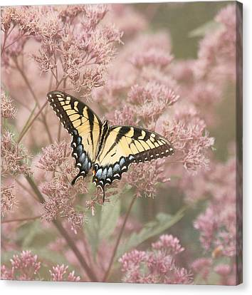 Tiger Swallowtail Canvas Print - Garden Visitor - Tiger Swallowtail by Kim Hojnacki